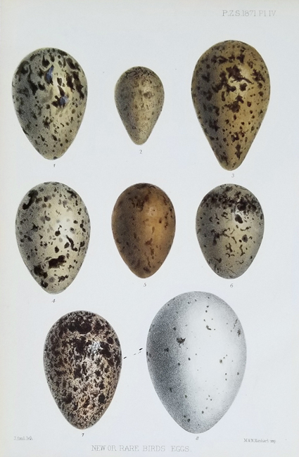 Proceedings of the Zoological Society of London, Eggs Category