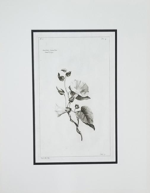 Buchoz, Pierre Joseph (1731-1807) Histoire Universelle De Regne Vegetal, uncolored engravings