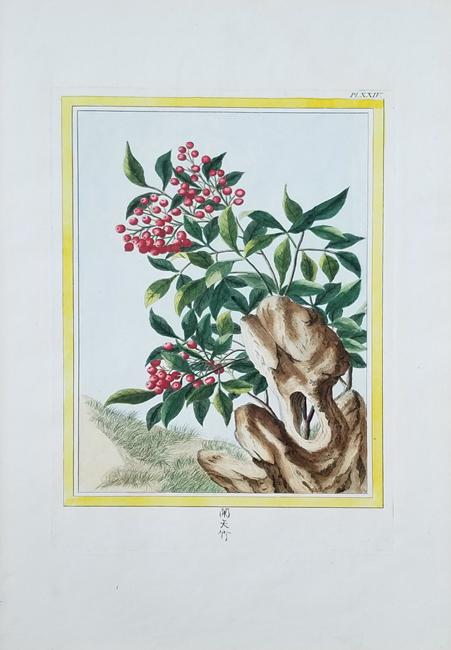 Buchoz, Pierre Joseph (1731-1807) Collection precieuse et enluminee des fleurs les plus belles st les plus curieuses qui se cultivent tant dans les jardins de la Chine que dans ceux de l'Europe