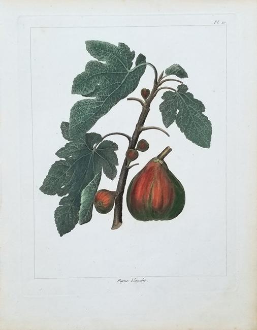 Noisette, Louis Claude (1772-1849)