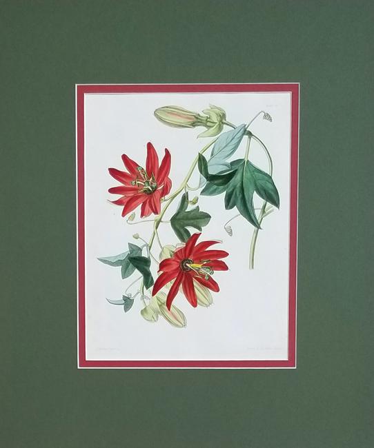 Paxton, Joseph (1801-1865) Paxton's Flower Garden